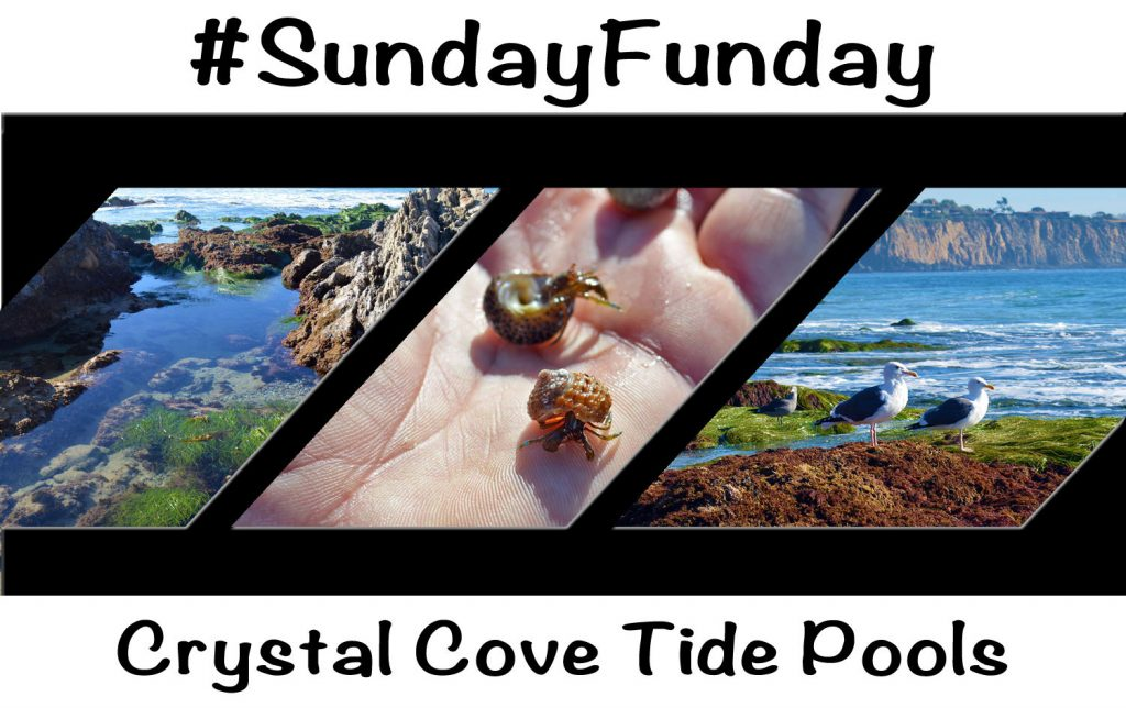 Crystal-Cove-Tide-Pool-1024x644