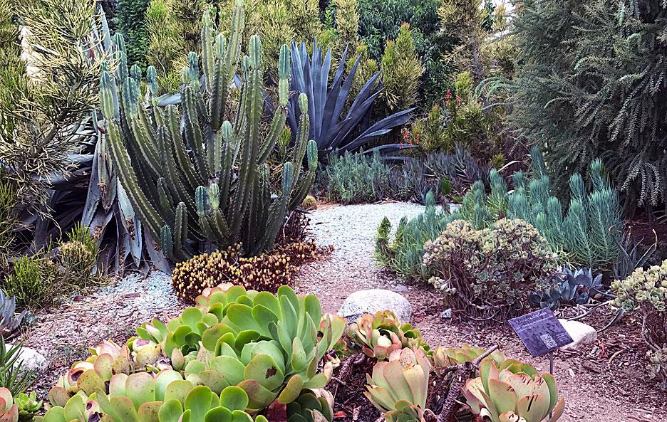 arlington-garden-cactus