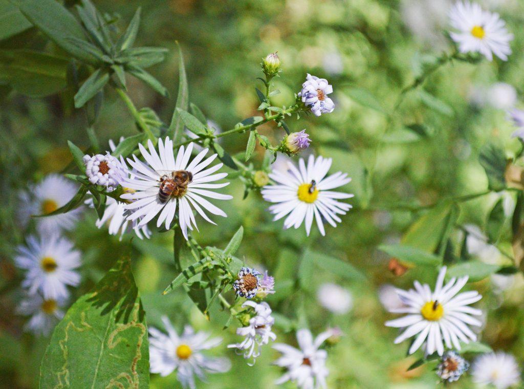 brian-holt-flower-bee-1024x760