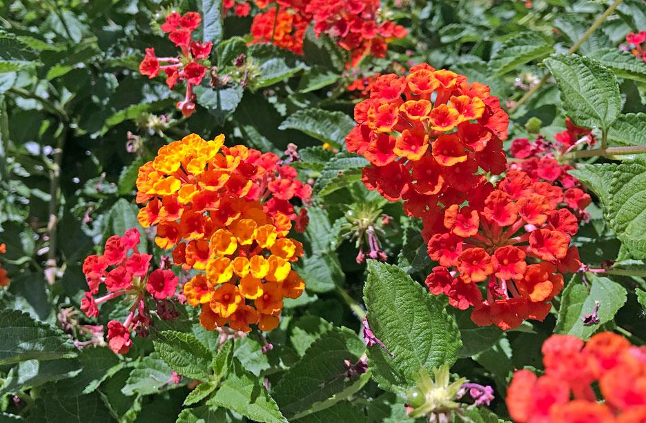 bright-spring-flowers