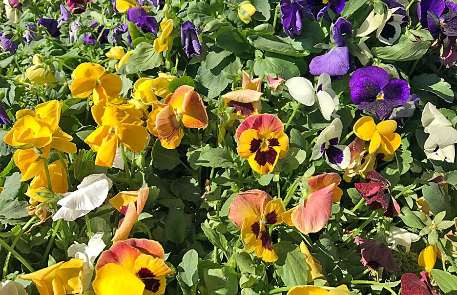 coachella-flower-bed