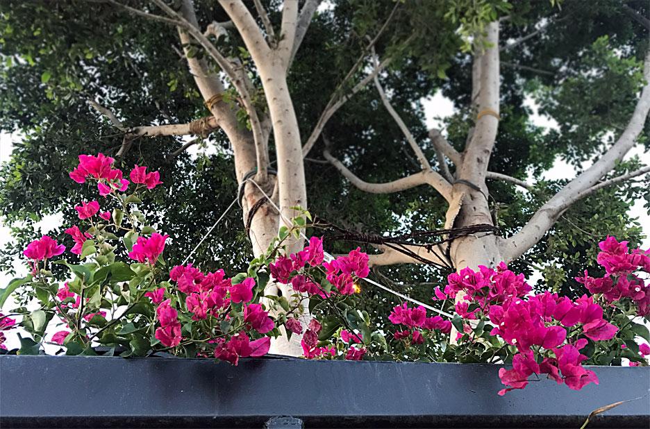 coachella-flowers