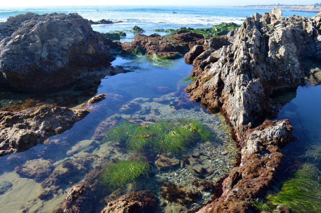 crystal-cove-tide-pool-1024x681