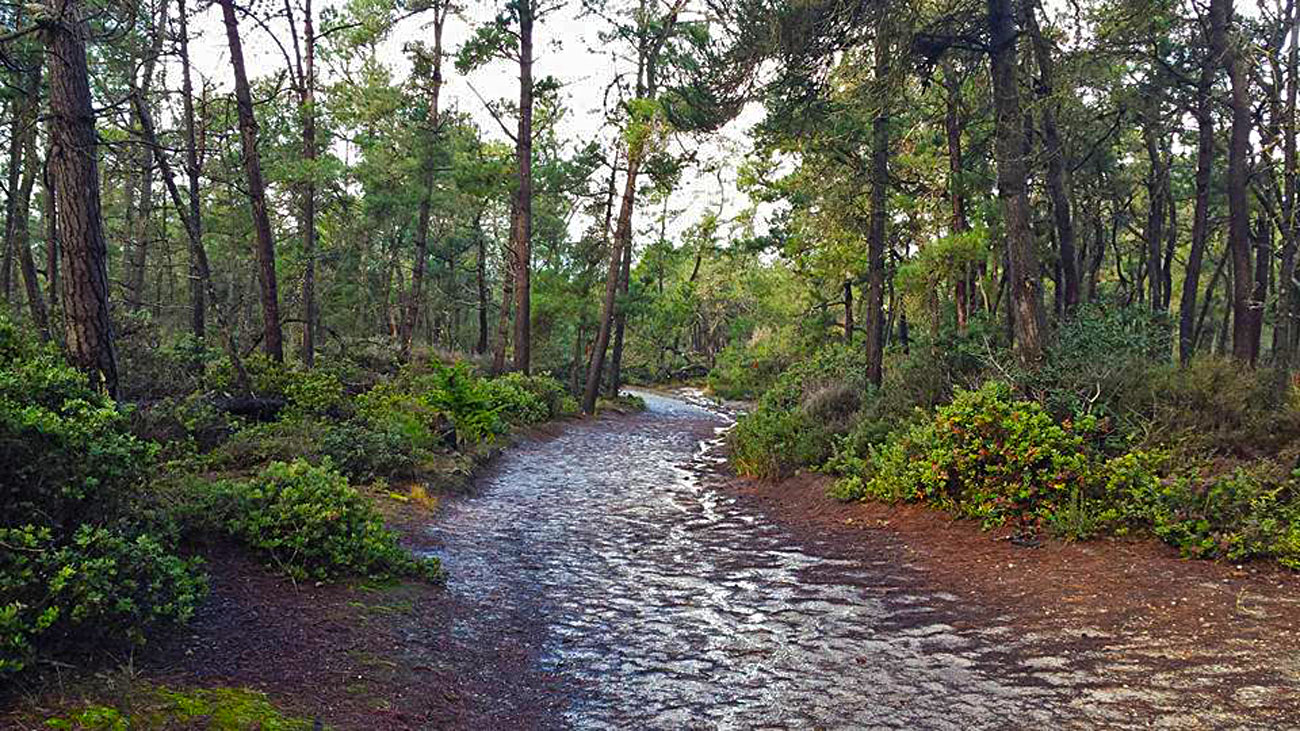 del-monte-forest-trails1-1