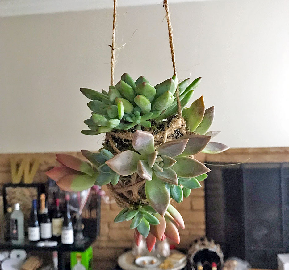 hanging-succulent-project