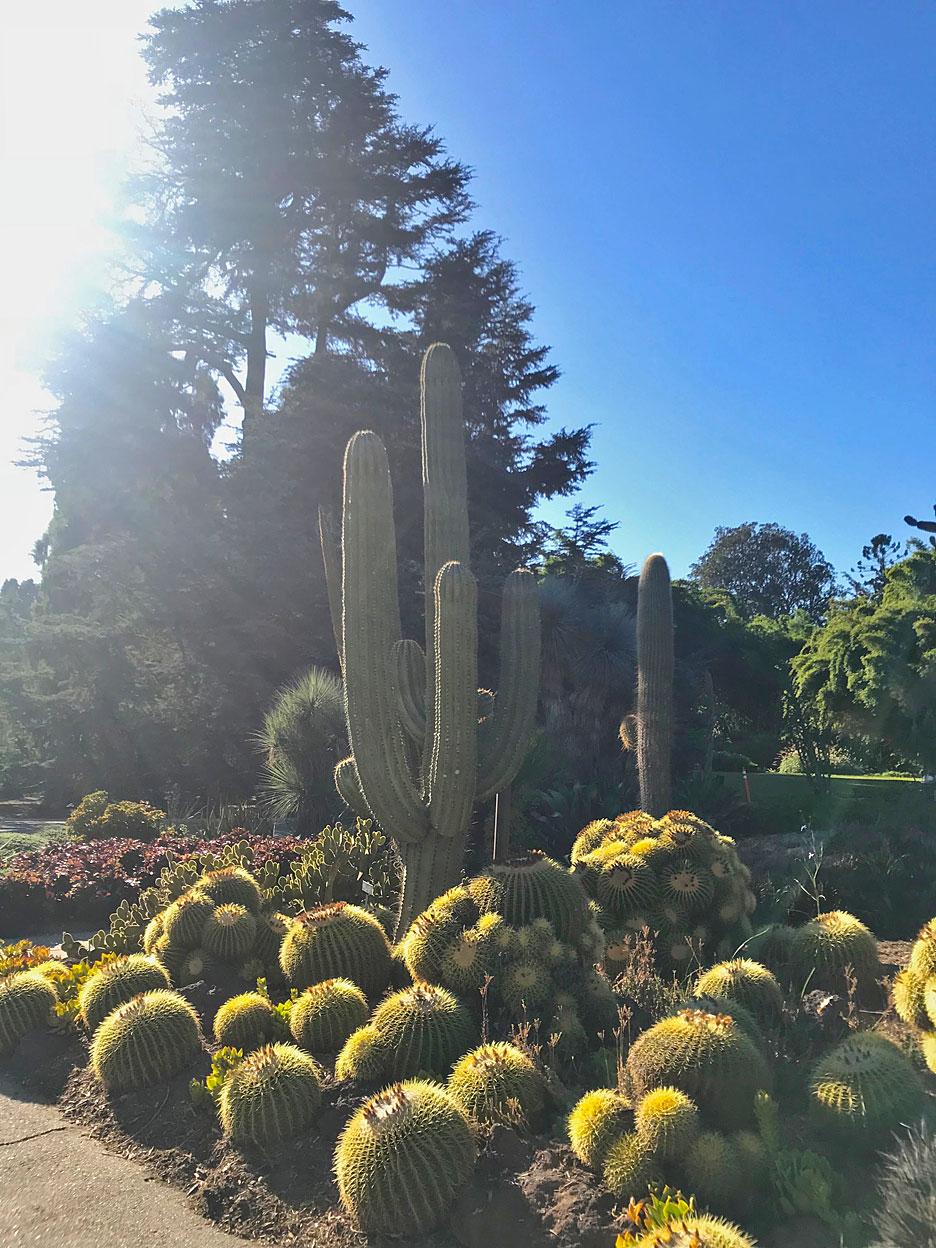 huntington-library-cactus-garden