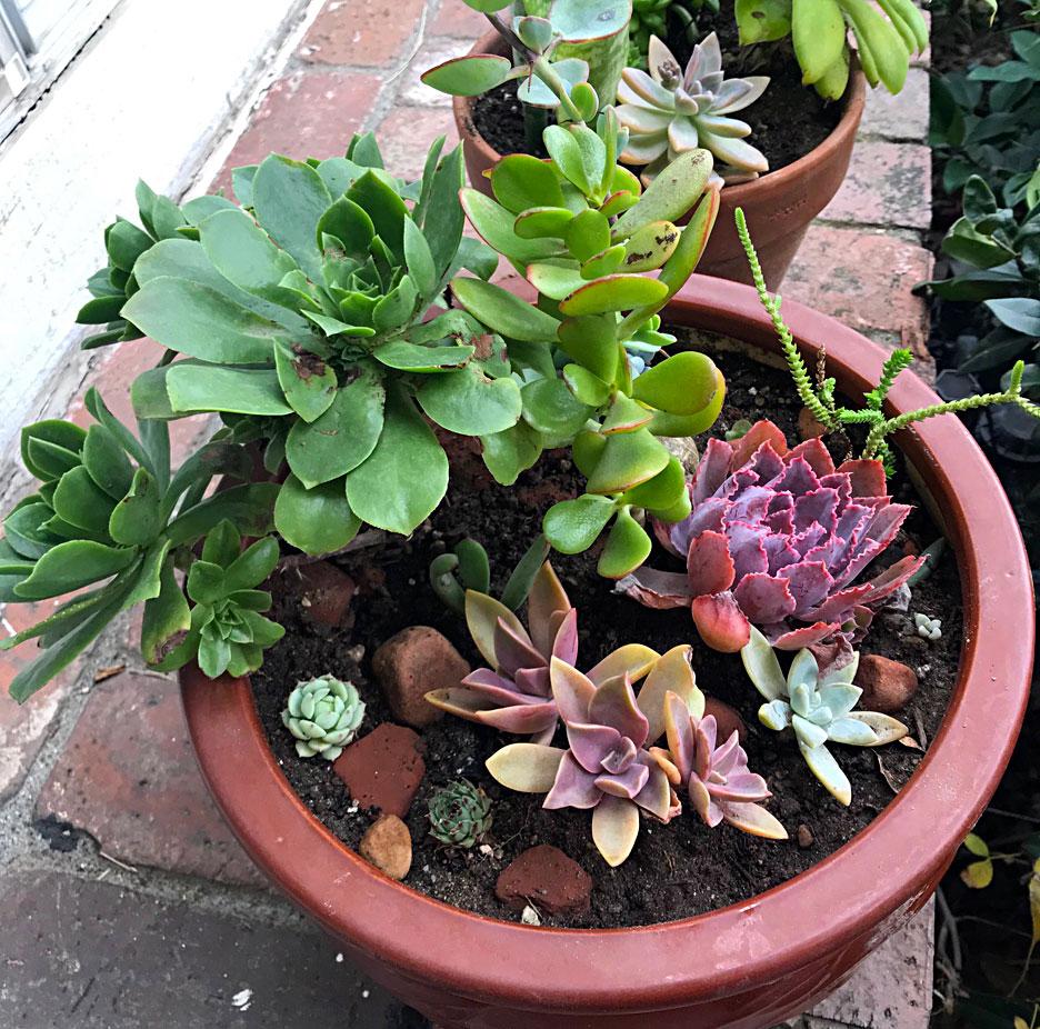large-succulent-pot
