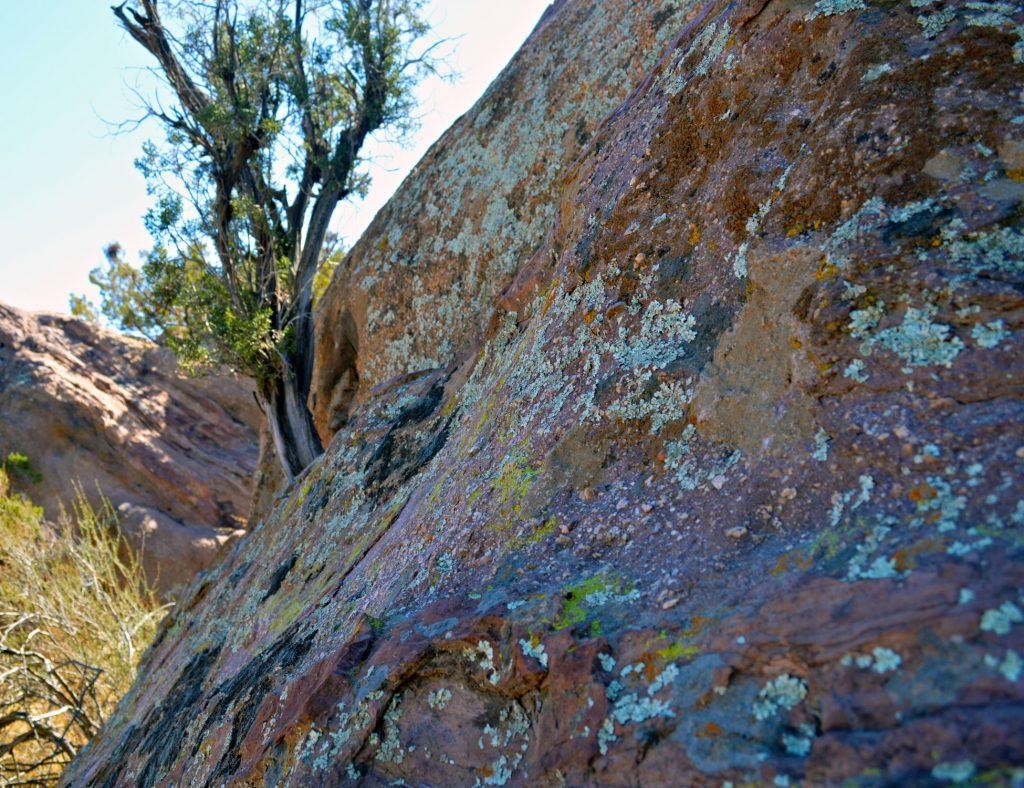 moss-on-rocks-1024x788