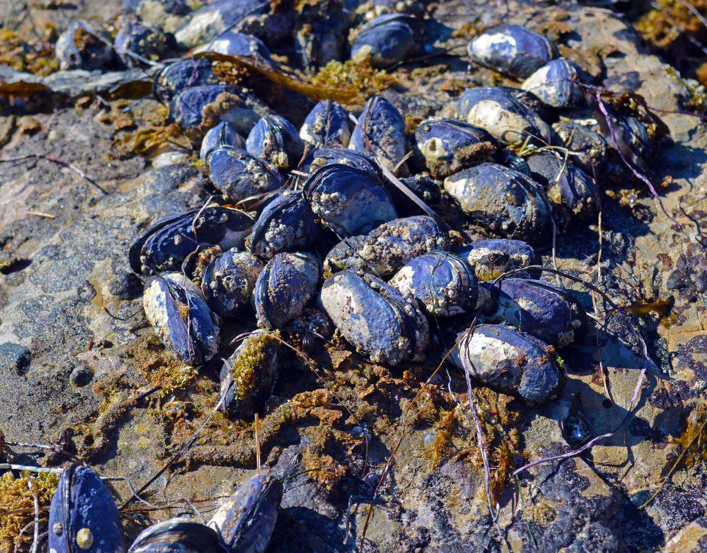 mussels-1024x802