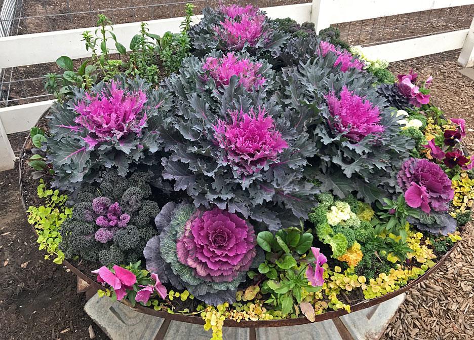 purple-garden-plant