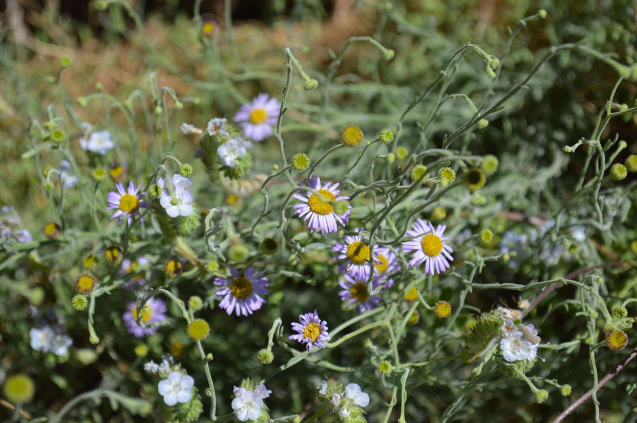 purple-yellow-flowers