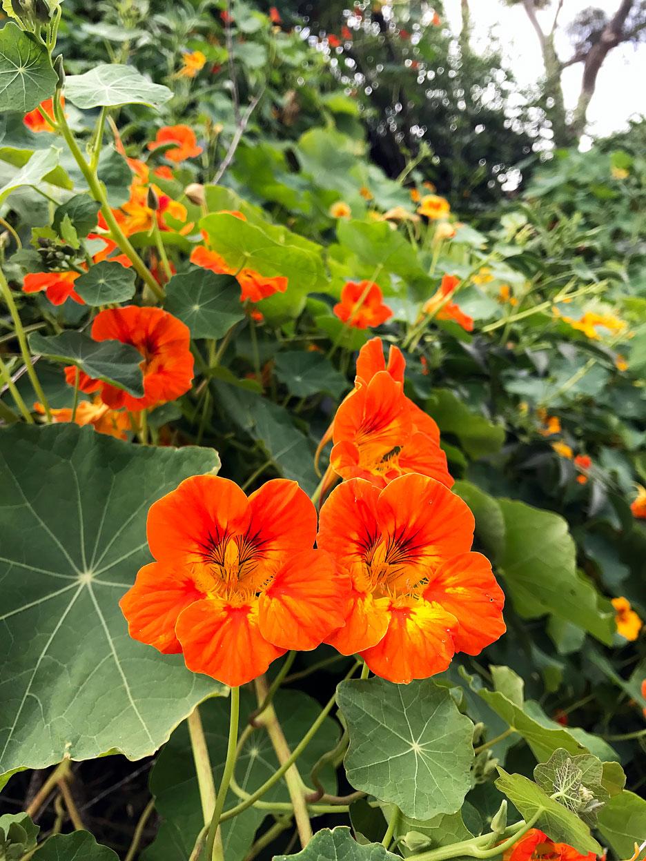 red-flower-vine