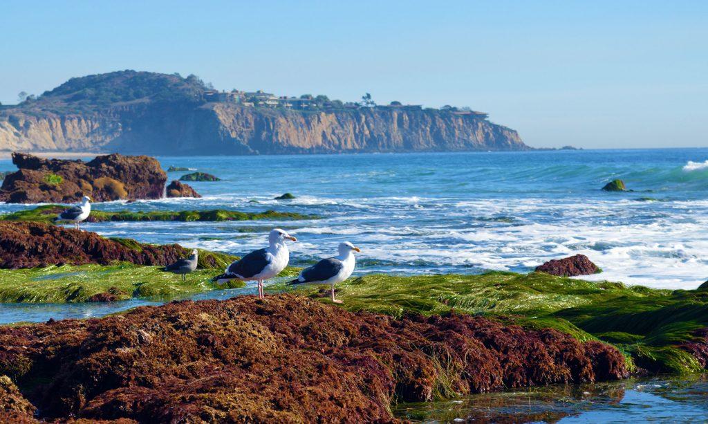 seagulls-1024x613