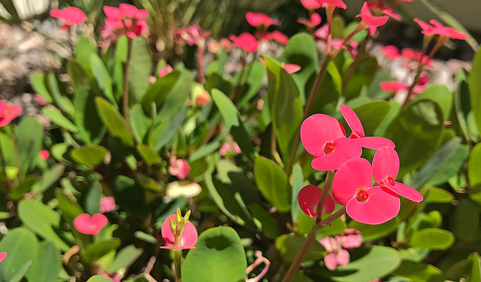 small-red-flowers