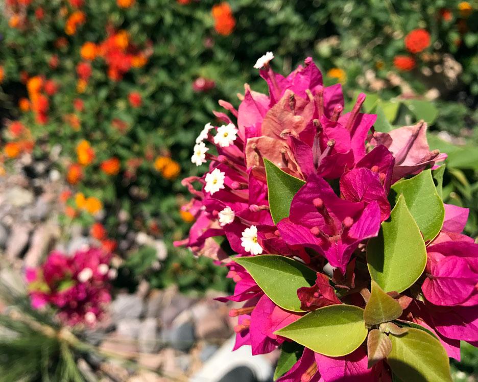 spring-flower-coachelle