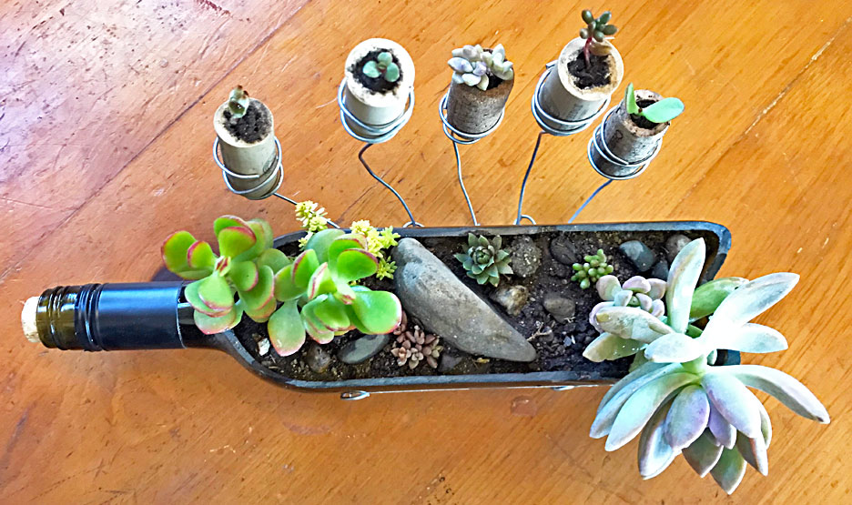 succulent-bottle-craft
