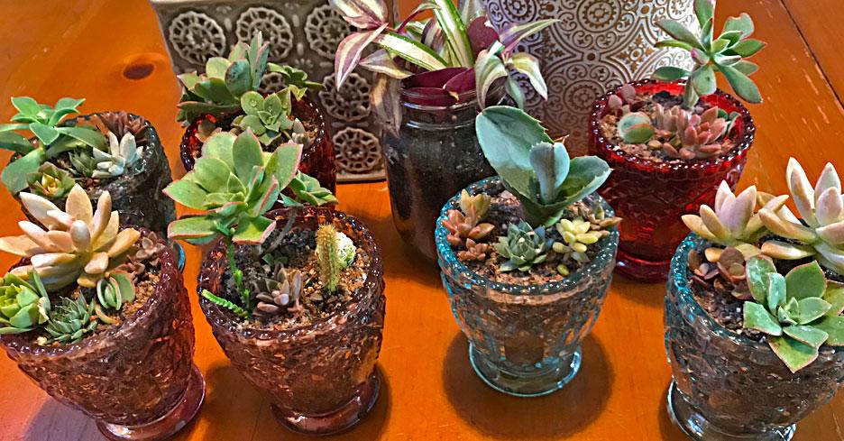 succulent-plants
