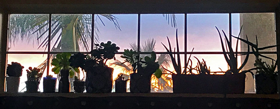 succulent-sunset