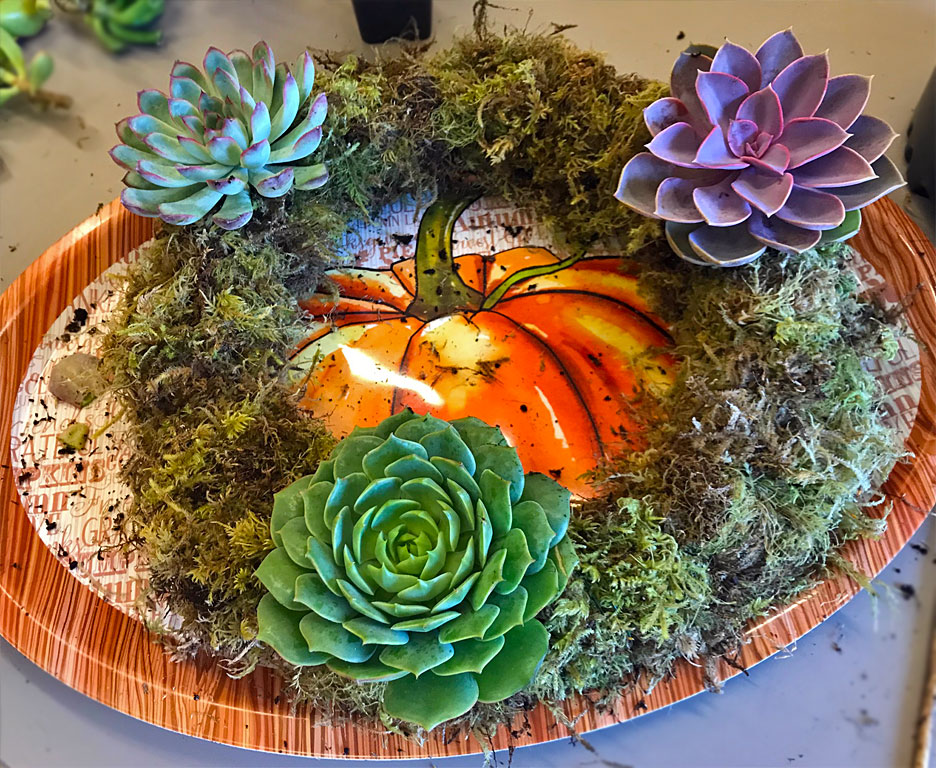 succulent-wreath-how-to