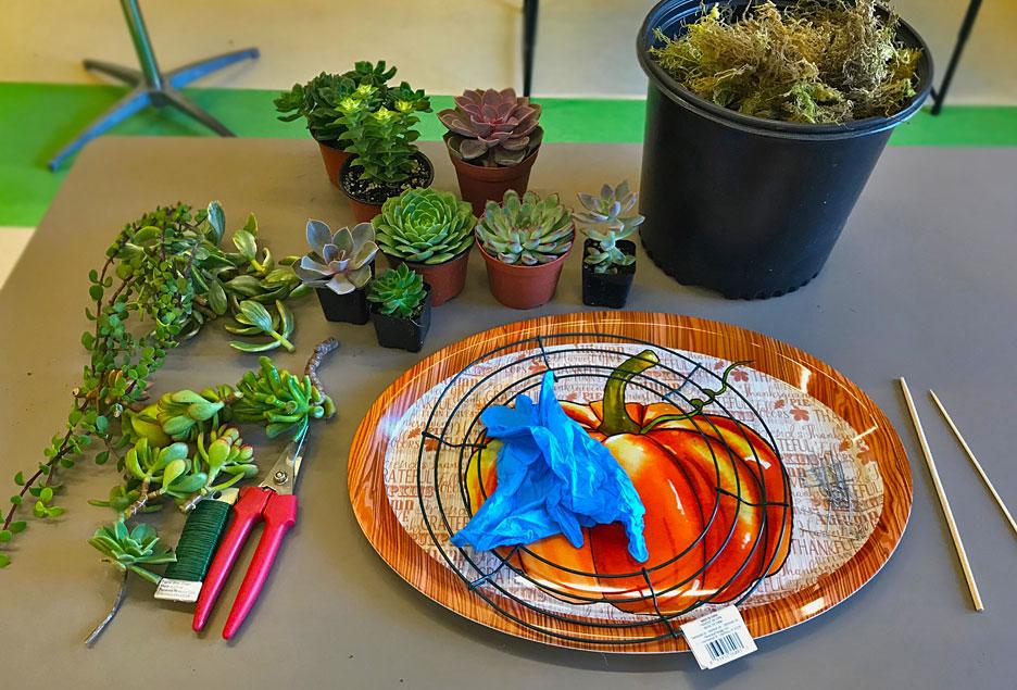 succulent-wreath-supplies